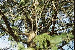 nature boy indalo / (luustra) Tags: expired film cano ft ql kodak gold 200