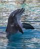 Free Hugs! (ORIONSM) Tags: nature mirage lasvegas trained hug cuddle olympus omdem1 olympus14150mm dolphin