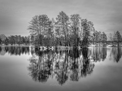 Time for reflection (Karsten Gieselmann) Tags: 1240mmf28 baum bavaria bäume em5markii germany jahreszeiten kronbertsweiher landschaft mzuiko microfourthirds monochrome natur olympus pflanzen schnee schwarz schwarzweis seeteichweiher weis wetter winter wolken bw black blackwhite clouds kgiesel lake landscape m43 mft mono nature pond sw seasons snow tree trees weather white teublitz bayern deutschland