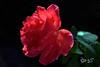 E l'Amore guardò il tempo... (Biagio ( Ricordi )) Tags: amore love fiori flower macro italy rose rosso tempo
