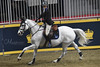 Asta and Camara (Megakillerwhales) Tags: megakillerwales horse horses equine equestrian show barn stall eventing royal royalhorseshow royalwinterfair dressage hunterjumping agriculture cow cows rder riders equiestrian englishpleasure englishriding western westernriding racing barrel breyer breyers breyerfest breyerhorse breyermodel horsephotography animal animals animalcloseups animalphotography wildlife wildlifephotography planet earth nature world sand nikon nikond3400 zookeeper zoo zebra zebras przewalski'shorse 2017 canada fall clydesdale clydesdales shire shires cavalia odessy showjumping jumping models bbcearth bbcnature animalplanet discoverychannel disneynature nationalgeaographic photography photo thoroughbred
