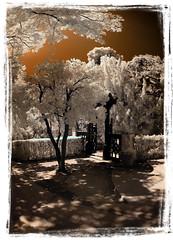 Porta xinesa del Laberint (Ar@lee) Tags: barcelona catalunya horta laberint fotografíainfrarrojos fullspectrum espectrecomplet photographyinfrared paisatges filtre720nm airelibre exteriors ir d50 nikond50 domenicobagutti antonideszanjas marquesdellupiàianfarràs árbol bordeparafotos colours jardines red trees garden