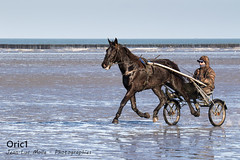 Entrainement (Oric1) Tags: 22 beach canon canoneos7d côtesdarmor france oric1 tamron150600 animal armorique black bouchots breizh bretagne brittany cheval eos horse mer plage sea jeanlucmolle