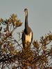 12-23-17-6349 (Lake Worth) Tags: animal animals bird birds birdwatcher everglades southflorida feathers florida nature outdoor outdoors waterbirds wetlands wildlife wings