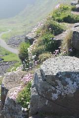 IMG_3428 (avsfan1321) Tags: ireland northernireland countyantrim unitedkingdom uk giantscauseway causewaycoast wildatlanticway basalt rock stone blackbasalt column columnarjointing columnarbasalt ocean atlanticocean landscape