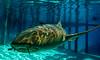 (Fifinator) Tags: nurse shark portrait bahamas turquoise underwater g12 canon photography exuma