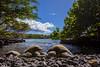 turtlebeachNov19-17 (divindk) Tags: cheloniamydas hawaii hawaiianislands honu maui diverdoug endangeredspecies greenseaturtle marine ocean reef sea seaturtle turtle