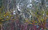 P1011465 (ewelina pstryka) Tags: nature countryside fall latefall olympus polish tree trees pollock natureisart colors strokes