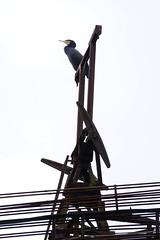 VÖLKLINGEN- SARRE - DEUTSCHLAND (eric borowski) Tags: steelworks steel steelindustry steelplant steelmill steelmaking blastfurnace hotrollingmill cokeplant coke cockerie hautsfourneaux acier aciérie charbon saar saarland völklingen usine unesco