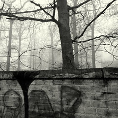 x x x (Bernhardt Franz) Tags: barbwire wall trees graffiti stacheldraht äste limb blackandwhite mauer bw mist nebel outlook prospects ausblick liberty sky stone wood stein holz