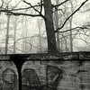 x x x (Bernhardt Franz) Tags: barbwire wall trees graffiti stacheldraht äste limb blackandwhite mauer bw mist nebel outlook prospects ausblick liberty sky stone wood stein holz