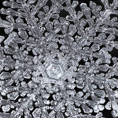 Bonus No. 25 Cropped (Don Komarechka) Tags: snowflake snow flake ice crystal fractal symmetry complex winter frozen detailed giant physics water mineral focusstacking science christmas