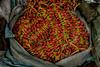 Marché aux fleurs de Mullick Ghat, Calcutta, Bengale occidental, Inde (Pascale Jaquet & Olivier Noaillon) Tags: détailmarchandises marchéauxfleurs fleurs calcutta bengaleoccidental inde ind