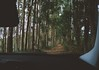 Through the woods (RafaeI Queiroz) Tags: nature woods trail offroad jeep