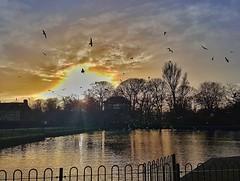 Last sunset of 2017 🌞😀🌞 (LeanneHall3 :-)) Tags: sunset sunshine sun sunrays eastpark kingstonuponhull hull lake water splashboat trees branches seagulls birds swarmofseagulls sky skyscape blue clouds houses landscape samsung galaxys7edge