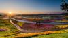 大地的畫布 .日出pictures of nature's beauty (lwj54168) Tags: 花 日出 彩色 colors drawing d750 nikon 1635mm f4 16mm