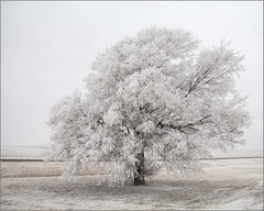Frosted and Cold (A Anderson Photography, over 2.6 million views) Tags: snow frost canon white ice storm icestorm