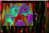 Narcisos (seguicollar) Tags: imagencreativa photomanipulación art arte artecreativo artedigital virginiaseguí flor flower flores narcisos morado verde red rojo colorido brillantes invierno