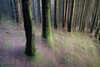 Greenly (AlistairJBorland) Tags: forest forestimpressions fujifilm icm impression magic magicforest magical atmosphere abstract panning woods woodland ethereal trees fantasy light colour painterly scotland simple dreamlike landscape romance winter xt2 blurry nature