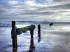 hanging on (Just Ron ;)) Tags: dawlish devon imageron sky clouds sea coast