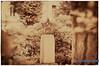 Deutschland Sachsen Bischofswerda_DSC0783ASW (reinhard_srb) Tags: deutschland sachsen bischofswerda denkmal udssr russland krieg ddr park platz kleinstadt osten soldat kampf gefallener artwork vintage rotstich blur lensblur säule sockel stern hammer sichel wappen sowjetunion sowjetstern kommunismus regime armee
