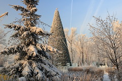New Year tree in Chernogorski Park, Abakan, Russia (Fedor Odegov) Tags: new year tree christmas russia siberia snow blue sky