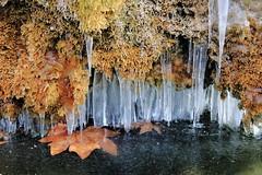 Fontaine gelée (zuhmha) Tags: bulgarie bulgaria winter hiver assenovgrad ice gel glace eau water fontaine mousse texture matière macro feuille