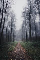 Waldweg im Herbst (stevepe81) Tags: bäume alpha6300 landschaft baumberge nebel sonyalpha baum zeiss1670f4 pfad weg münsterland outdoor herbst wald lightroom havixbeck