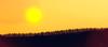 Creation... (Coisroux) Tags: surreal luminescence trees hillside sunset sunlight light creation artistic dramatic golden hues lenseflare flare silhouette surrealism dream d5500 nikond horizon landscape