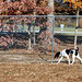 Turkey Hill Dog Park 83
