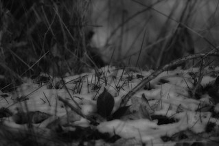 im Winter - Soligor f/350mm 1:5.6