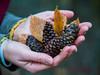 L'autunno è la primavera dell'inverno. (Henri de Toulouse-Lautrec) (Margcoss) Tags: foglie mani hands