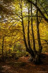 La mano de la tierra (SantiMB.Photos) Tags: 2blog 2tumblr 2ig fotohiking urederra nacederodelurederra urbasa río river otoño autumn bosque forest geo:lat=4280060150 geo:lon=213126425 geotagged baquedano navarra españa esp