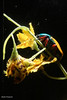 234A9523.jpg (Mark Dumont) Tags: beetle cincinnati dumont headed insect insects jade mark zoo