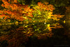 徳川園 / Tokugawa-en Garden (kimtetsu) Tags: 名古屋市 愛知県 日本 jp 紅葉 autumnleaves 秋 autumn 名古屋 nagoya 日本庭園 japanesegarden 反射 reflection japan