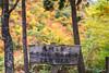 DSC_3282 (Timmy Tsai) Tags: autumnleaves brook canyon colors japan miyagiken narukyogorge otaniriver tourism trail train autumn mountain photography season tree 大谷川 季節 宮城縣 山 峽谷 攝影 旅遊 日本 樹 步道 溪水 火車 秋天 紅葉 顏色 鳴子峽