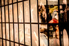 Pictures from Home (Thomas Hawk) Tags: america bayarea larrysultan museum picturesfromhome sfbayarea sfmoma sanfrancisco sanfranciscomuseumofmodernart usa unitedstates unitedstatesofamerica california us fav10