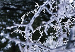 Icy Abstract (joyolsonnichols) Tags: nichols icy branches winter