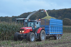 Claas Jaguar 970 SPFH filling a Broughan Engineering Trailer drawn by a Massey Ferguson 6480 Tractor (Shane Casey CK25) Tags: claas jaguar 970 spfh filling broughan engineering trailer drawn massey ferguson 6480 tractor mf red agco bandon silage silage17 silage2017 maize maize17 maize2017 winter feed fodder county cork ireland irish farm farmer farming agri agriculture contractor field ground soil earth cows cattle work working horse power horsepower hp pull pulling cut cutting crop lifting machine machinery nikon d7100 tracteur traktori traktor trekker trator ciągnik crops corn collecting