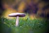 Between green (www.studio360fotografia.es) Tags: olympus omd em10 zuiko 45mm 18 setas mushroom fantasy fantasía bokeh desenfoque colores colors