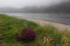 O.T. (Neue Eule) Tags: rhein ufer mittelrheintal nebel blumen germany herbst
