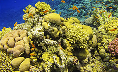 En las Profundidades (Isma Web) Tags: marrojo underwater canon egipto corales colores agua water
