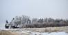 After the Fog Goes (cutthroatsrule) Tags: frost hoarfrost montana broadview winter white shelterbelt