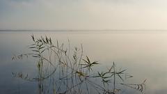 Calligraphie (Pluie du matin) Tags: hatman lac lake eau water hourtin gironde france calme sérénité serenity calm coolness landscape paysage roseaux