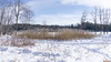 Parc du Lac Beauchamp en Hiver, Gatineau, Canada - 4199 (rivai56) Tags: gatineau québec canada ca parcdulacbeauchampenhiver sonyphotographing lakebeauchampparkinwinter