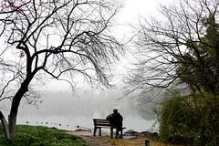 Westlake 西湖 (MelindaChan ^..^) Tags: westlake 西湖 tree lake watrer chanmelmel mel melinda melindachan hangzhou china 杭州 relfection
