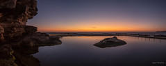 Love the light but not the mozzies (JustAddVignette) Tags: australia bird dawn firstlight headland landscapes newsouthwales northcurlcurl northernbeaches ocean panorama rockpool rocks seascape seawater sky sydney water