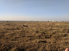 2017-12-28 17.45.02 (dcwpugh) Tags: travel nairobi kenya safari nairobinationalpark