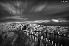 "Fast Track (""A.S.A."") Tags: beach crimdon hartlepool teeside cleveland northeast northeastcoast track dunes sky longexposure slow shutter cloud movement sonya7rinfrared830nm sonyzeissvariotessarfe1635mmf4 infrared infrared830nm blackwhite mono monochrome greyscale niksoftware silverefex asa2017"