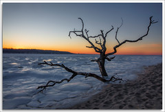 Magnificent Desolation (richpope) Tags: sandyhook newjersey sandyhookbay frozen sunset jerseyshore winter tree silhouette gatewaynationalrecreationarea